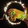Цирки в Большом Полпино